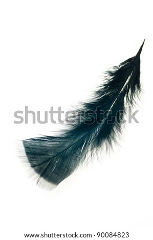Black  wing feather isolated on white background - stock photo