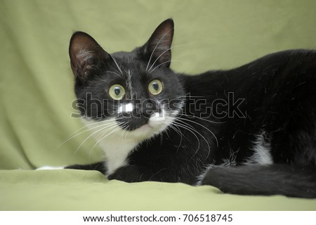 Black with white cat on a green background