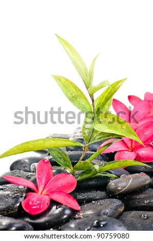 Black zen stones with red flowers and bamboo plant - stock photo