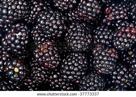 blackberries background