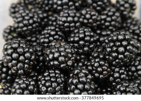 Blackberries closeup