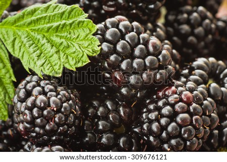 Blackberries in a decorative pot - stock photo