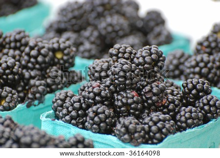 Blackberries in blue baskets ready for sale at a farmer's market. - stock photo