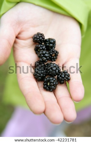 Blackberries on a farmer woman hand in the forest