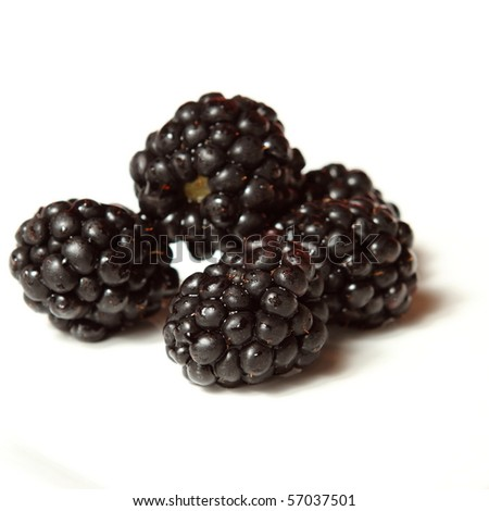 Blackberries on a white plate with room for your text - stock photo