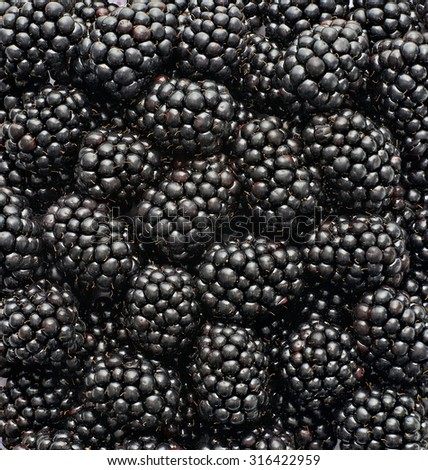 blackberries. photographed in the studio. Background full of fresh, healthy and tasty blackberries - stock photo