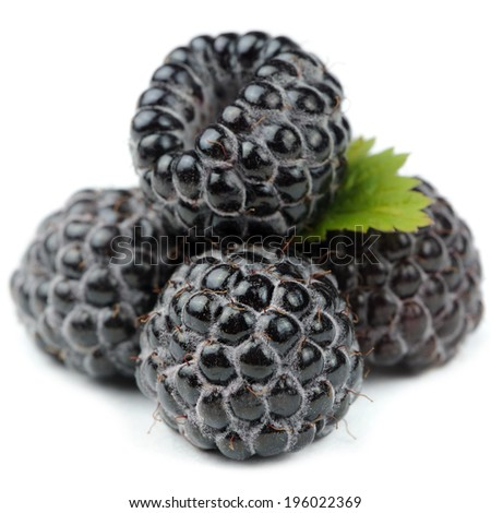 Blackberries with Green Leaf Close-Up Isolated on White Background - stock photo