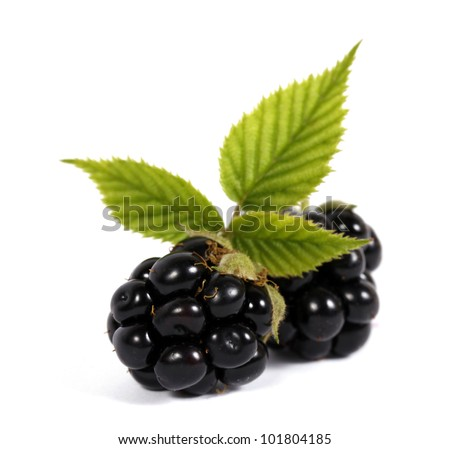 Blackberries with leaves on the white background - stock photo