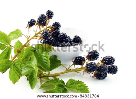 blackberry berries on branch with green leaves isolated white background - stock photo
