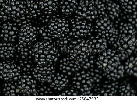Blackberry bramble berry background texture juicy summer fruit  - stock photo