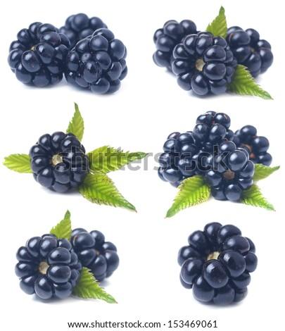 Blackberry fruit - stock photo