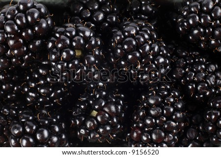 Blackberry fruit detail front view background