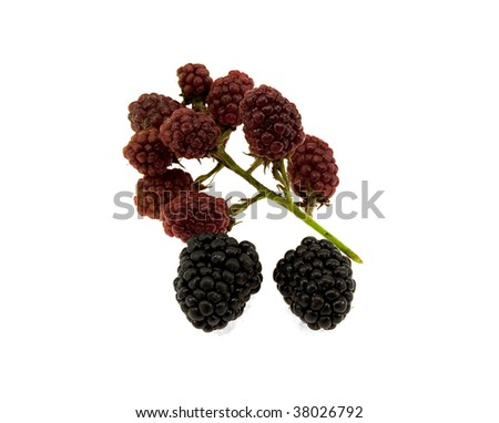 Blackberry fruits isolated on a white background - stock photo