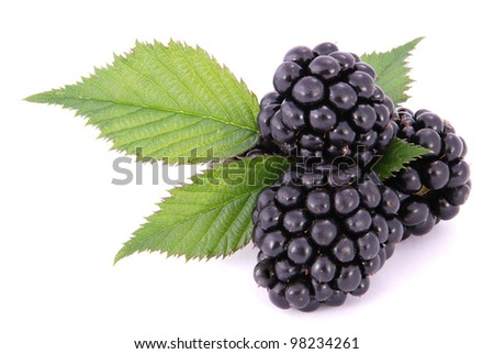 Blackberrys with Leafs on white