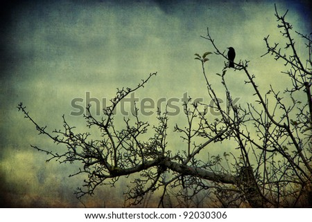 Blackbird on the branch mysterious atmosphere