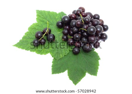 Blackcurrant isolated on white - stock photo