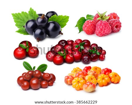 Blackcurrant, raspberry, lingonberry, cranberry, cloudberry. Separate clipping paths for berries, for their shadows and for raspberry thin hairs. Most consumed berries. Infinite depth of field