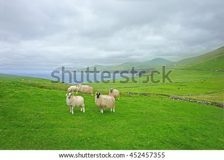 Blackface sheep overlooking Dingle bay with a distant incoming sea mist, Dingle Peninsula, County Kerry, Ireland