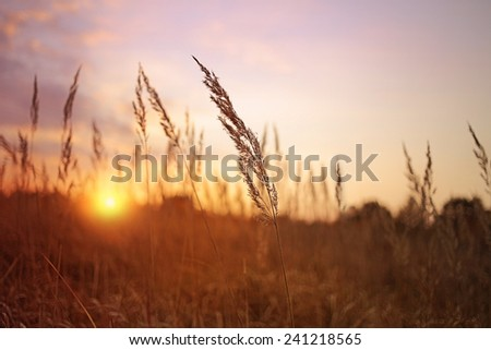 blade of grass during sunset