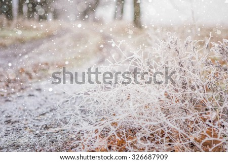 Blade of grass in the snow. Oak leaves in the snow. The leaves are yellow. Close-up, macro. Snowfall. - stock photo