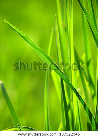 Blade of green grass - stock photo