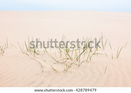 Blades of grass in sand dune - stock photo