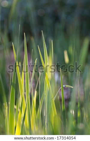 Blades of green grass bathed in soft spring sunlight.