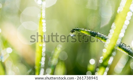 Blades of green grass with glistening raindrops and a background bokeh of sparkling sunlight on moisture , nature, eco or bio background. - stock photo
