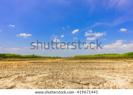 Blank agriculture field with blue sky background