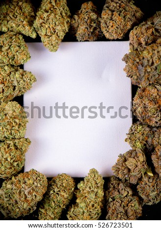 Blank canvas framed by dried cannabis buds, indica and sativa strains - isolated on black background