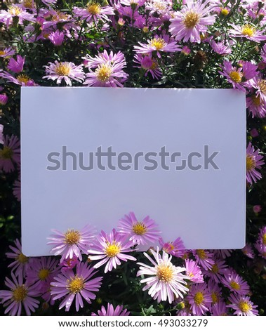 Blank card photographed in a garden with autumn pink flowers