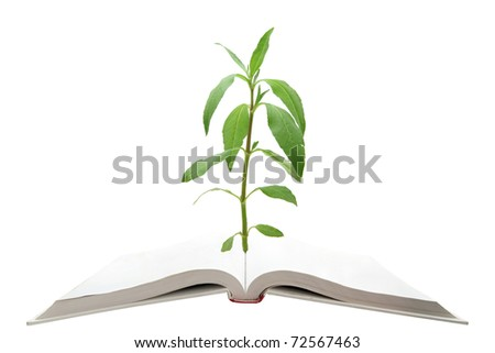 blank magic book with green tree - stock photo