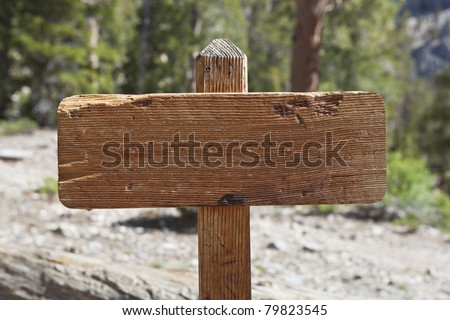 Blank old wooden trail sign in a pine forest. - stock photo