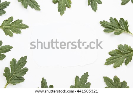Blank paper card and green leaves on white background. Overhead view. Flat lay, top view.