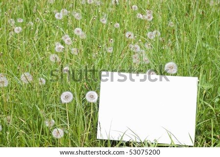 Blank paper card in green grass with dandelion blowballs and selective focus