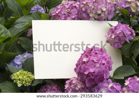 Blank paper note in beautiful hydrangea flowers - stock photo