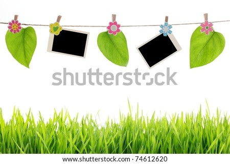 Blank photographs with leaf hanging over green grass - stock photo