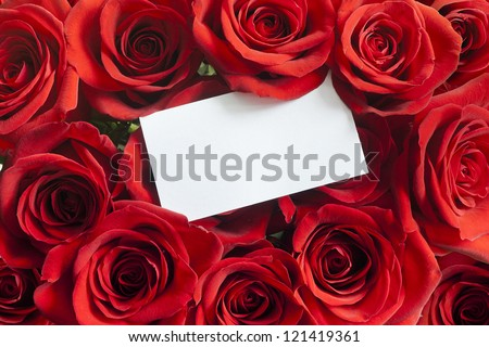 Blank white gift card on a red rose Valentine - stock photo