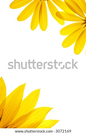 Blank white page decorated with natural flower details. - stock photo