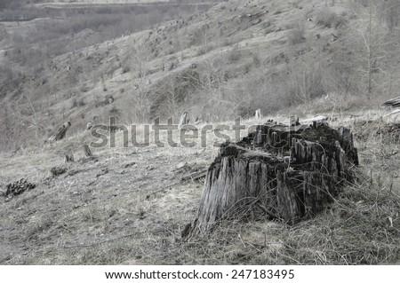 Blast zone on Mt. St. Helens - stock photo