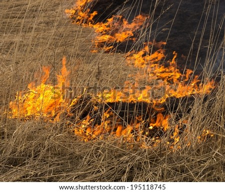 Blaze of fire in a fire at a field. Burning dry grass.