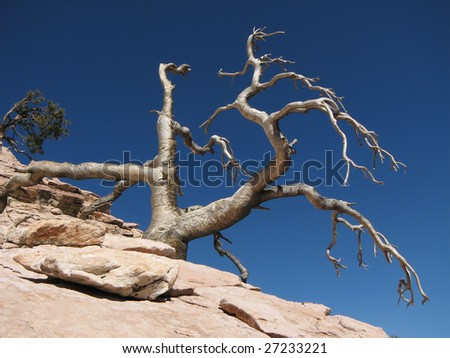 bleached dead tree on a mountain top against a blue sky