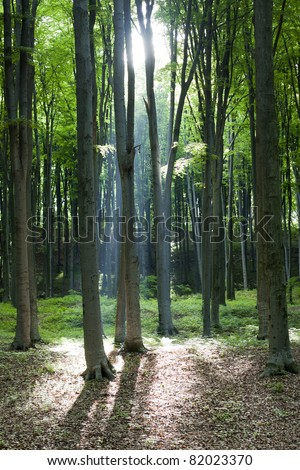 Blessed light through the forest - stock photo