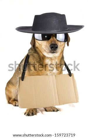 blind hat dog