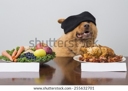 Blindfold challenge game with dog. Dog choosing between two kind of food. - stock photo
