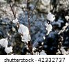 Blobs of snow melting on bare winter twigs - stock photo