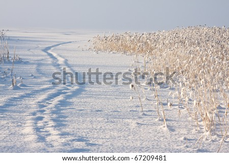 Blocked path on snow leading behind the bed of reeds on frozen sea, horizontal - stock photo