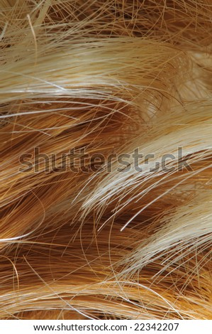 Blond and auburn red hair macro image