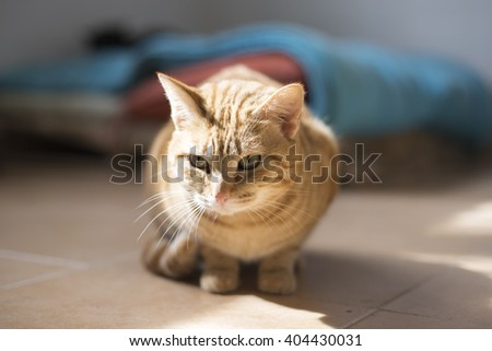 Blond cat resting in shelter - stock photo