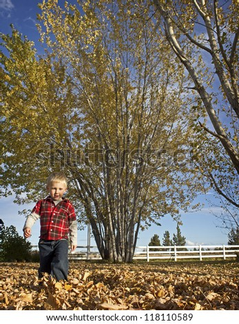 Blonde Boy walking through autumn leaves in yard. - stock photo